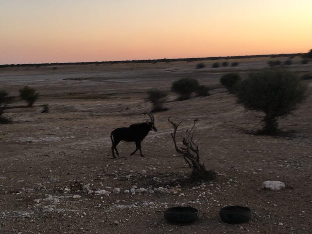sable i sydafrika